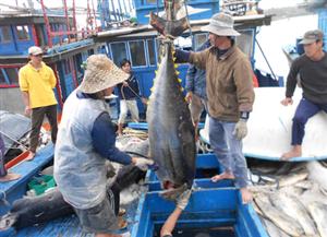 Tin tức cập nhật về môi trường biển miền Trung
