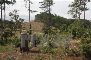Phần Lan giúp cơ sở dữ liệu quản lý rừng xây dựng Việt Nam