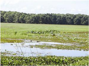 Biến đổi khí hậu để thách thức bằng sông Cửu Long năm 2017
