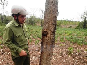 Tây Ninh điều tra ngộ độc cây rừng