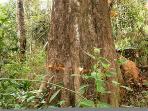 Rừng Tây Ninh bị đe dọa bởi các hoạt động của con người