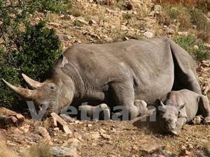 VN Chính phủ phê duyệt dự án về phòng, chống buôn bán trái phép các loài bị đe dọa