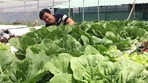 Học sinh sử dụng chất thải thủy sản để trồng rau an toàn