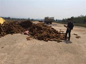 Doanh nghiệp Trung Quốc thực hiện tắt dược liệu quý trong Tây Nguyên