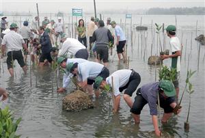 Thừa Thiên - Huế trồng rừng ngập mặn để du lịch sinh thái