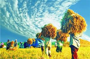 Hà Lan, Việt Nam ký kết 49 hợp đồng an ninh lương thực