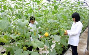 Nền nông nghiệp Việt Nam bị mất thị phần trên sân nhà