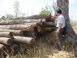 Hướng dẫn của PM để đóng rừng tự nhiên bị bỏ qua bởi người khai thác gỗ bất hợp pháp
