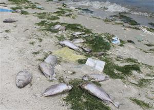 Sự cố môi trường tại Đường Khánh Hòa gây ra thiệt hại lớn