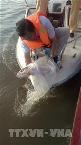 Các địa phương ĐBSCL thả tôm bố, thả cá