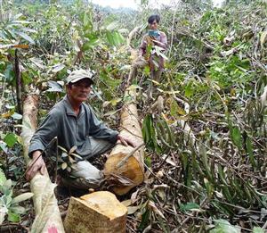 Bộ kiểm tra phá rừng ở Phú Yên