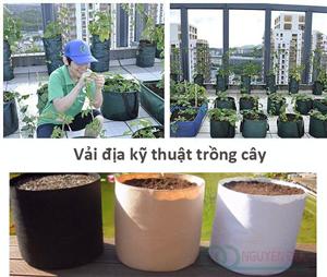 Vải địa kỹ thuật trồng cây loại nào tốt?